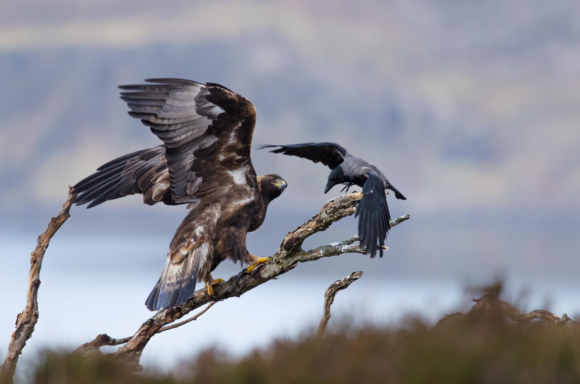 Golden Eagle Tours Scotland